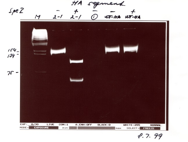 The gel that launched millions of vaccines (by Professor Ervin Fodor). The presence of a genetic tag in the HA gene of the first fully recombinant influenza virus.